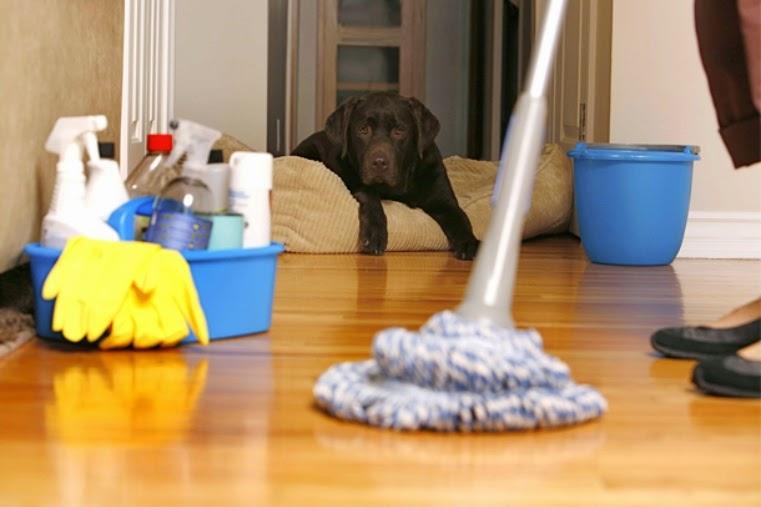 Mascotas en casa: consejos de limpieza | El Blog de los mejores ...