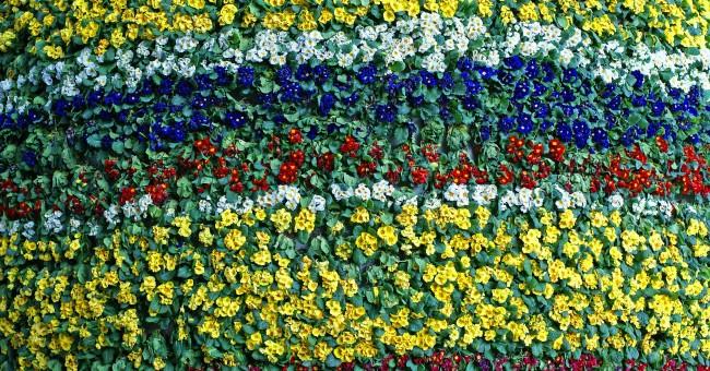 C mo hacer un jard n vertical el blog de los mejores - Jardin vertical en casa ...