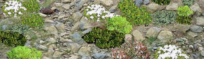 C mo construir una rocalla el blog de los mejores for Trucos jardineria