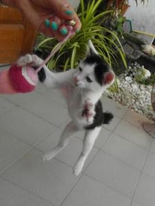 Gato saltando