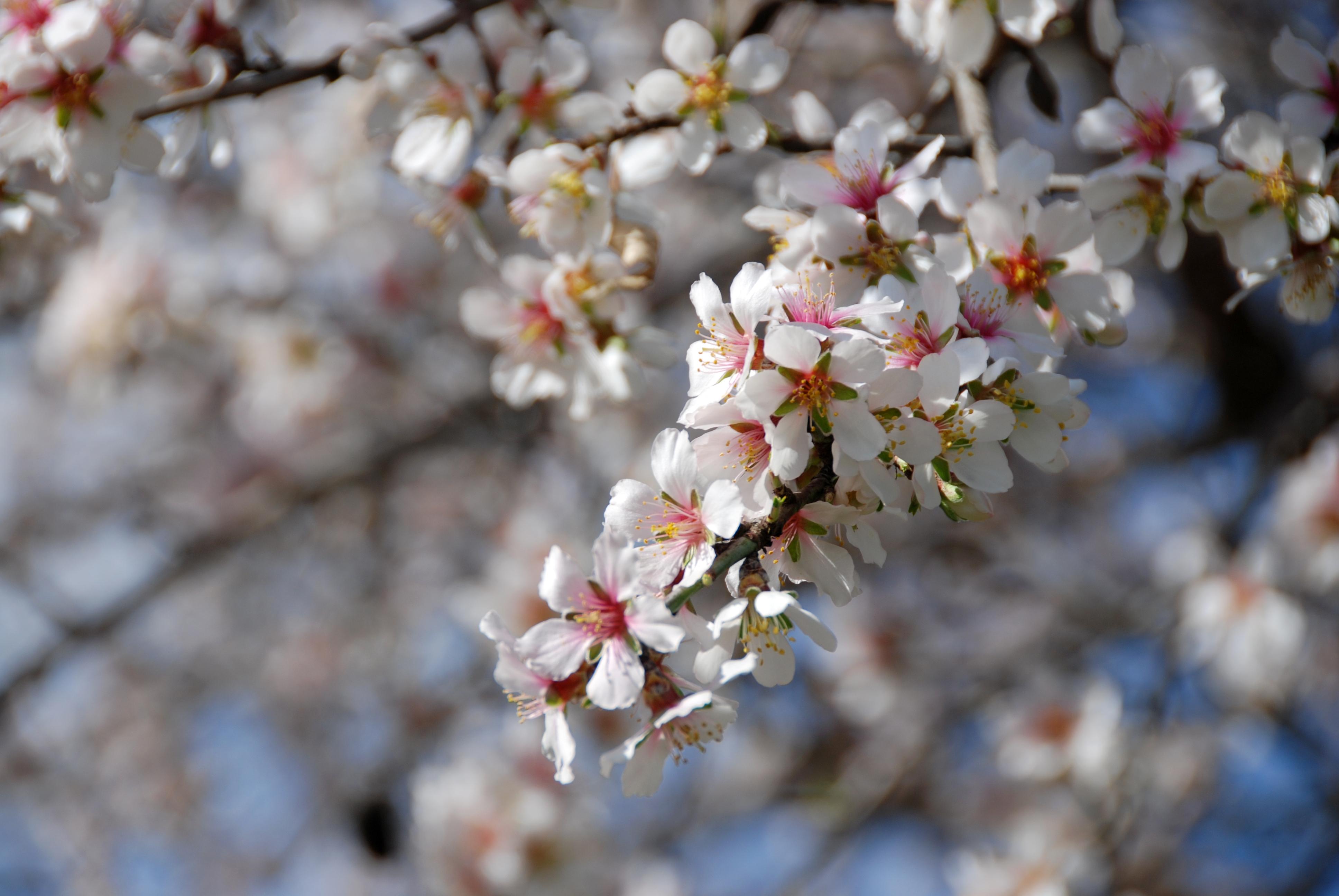 Rboles frutales en maceta el blog de los mejores - Plantar arboles frutales en macetas ...