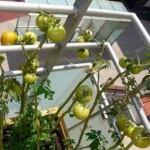 huerto-ecológico-jardinería-alicante2