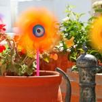 Maceta de flores de colotes