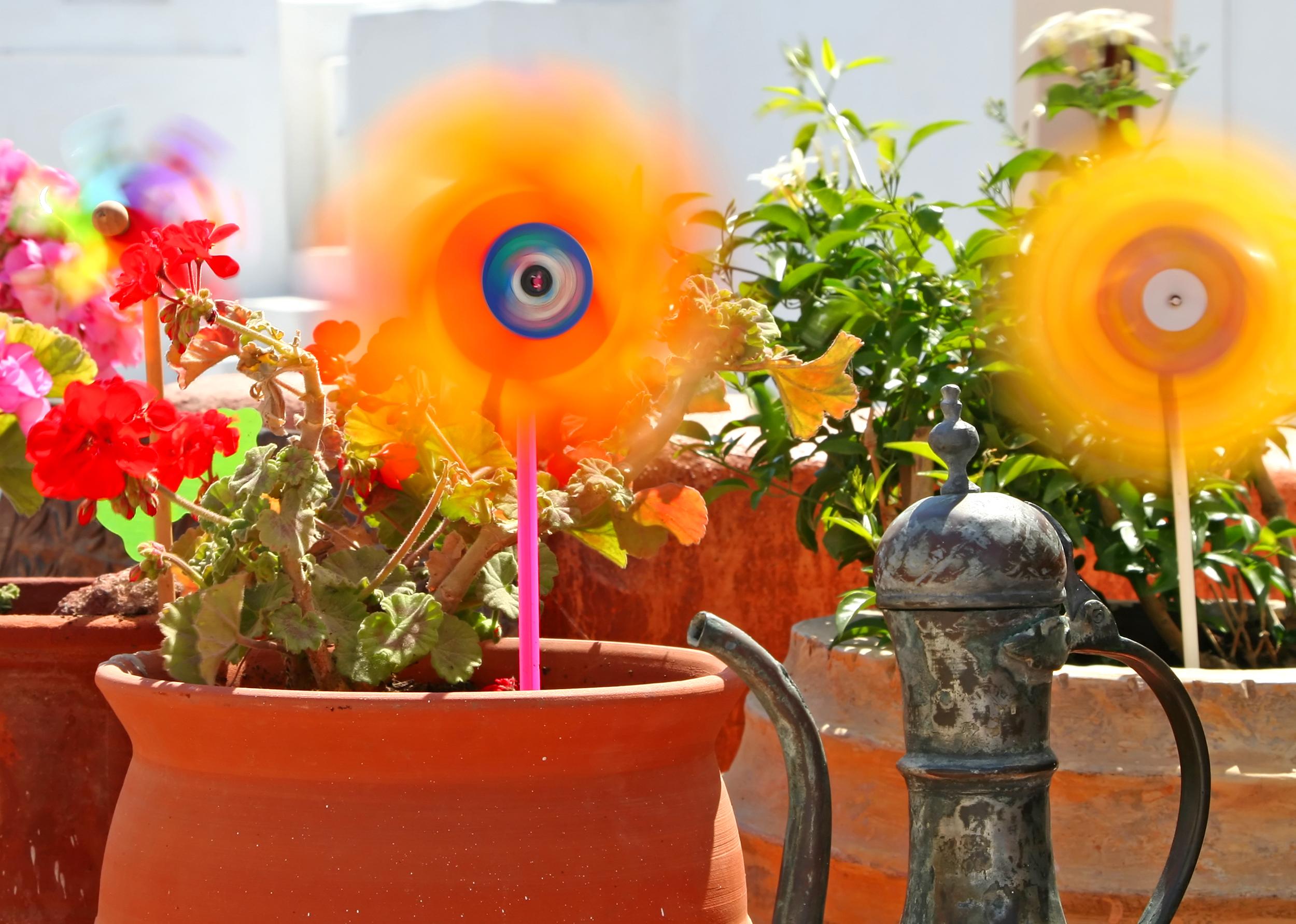 Como elegir las plantas y flores para tu jardin for Matas de jardin
