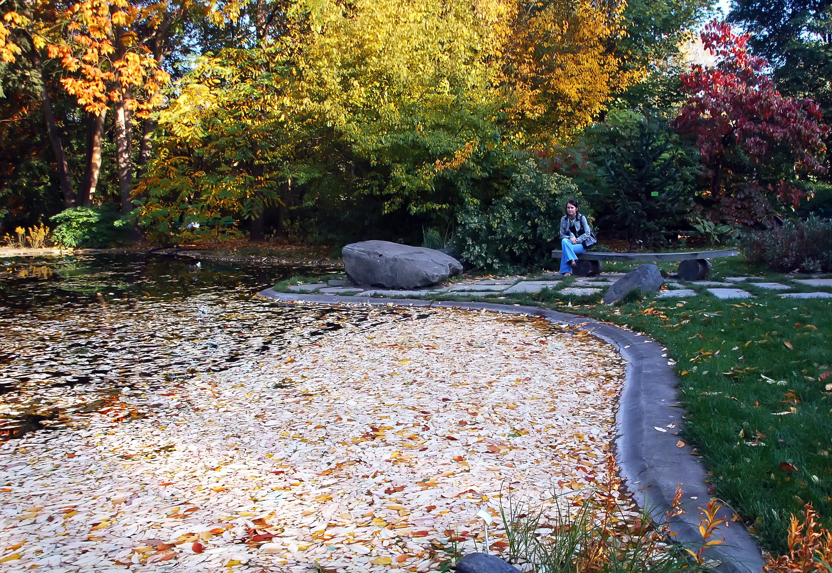 C mo elegir las flores y plantas para tu jard n el blog for Plantas para poner cerca de la piscina