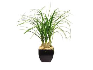 Cu ndo y c mo trasplanta una planta el blog de los for Varias plantas en una maceta