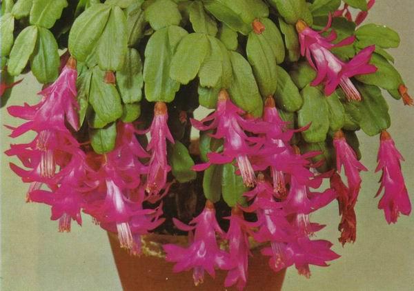 Precioso jard n ahorrando agua planta crasa el blog de - Plantas crasas colgantes ...