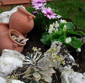 Precioso jard n ahorrando agua planta crasa el blog de - Plantas para rocallas ...