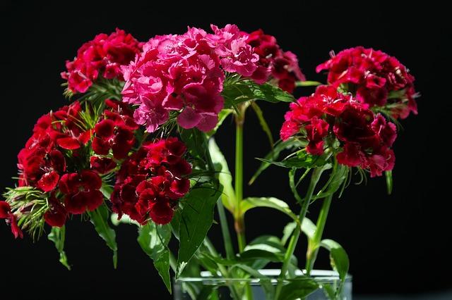 Consejos Y Trucos Para Conservar Las Flores Frescas El Blog De Los