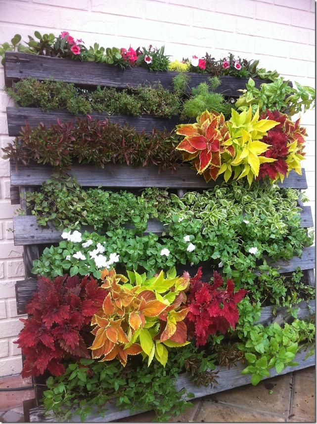 Haz tu propio jard n vertical con un viejo palet el blog - Plantas para jardines verticales ...