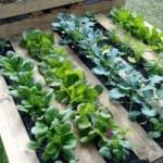 Hacer un jardín vertical con un palet