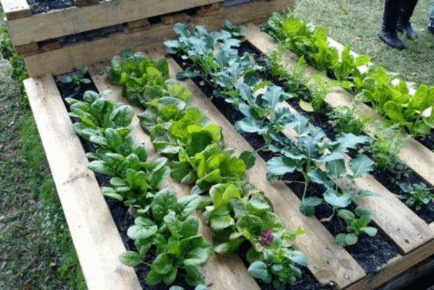 Haz tu propio Jardín Vertical con un viejo Palet | El Blog de los ...