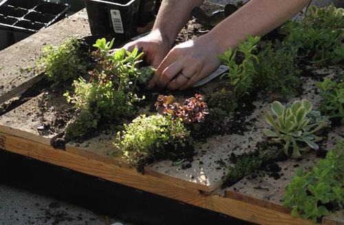 Haz tu propio jard n vertical con un viejo palet el blog for Como hacer un jardin vertical