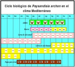 Ciclo Paydandisia en el mediterraneo